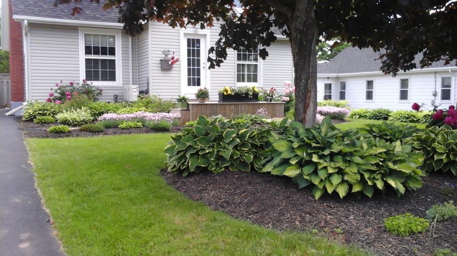 Jane's Garden