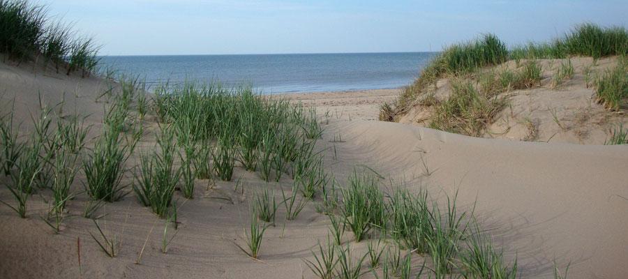 Dune-Spirit Cottage