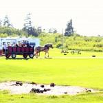 Waterford Cottages & Campground Inc